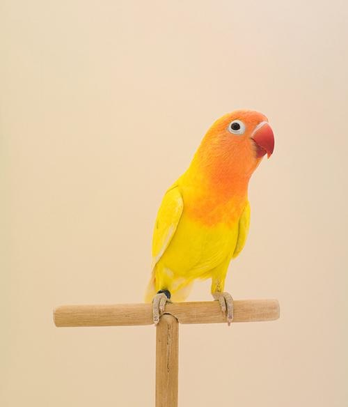 Birds_-_lukestephenson1